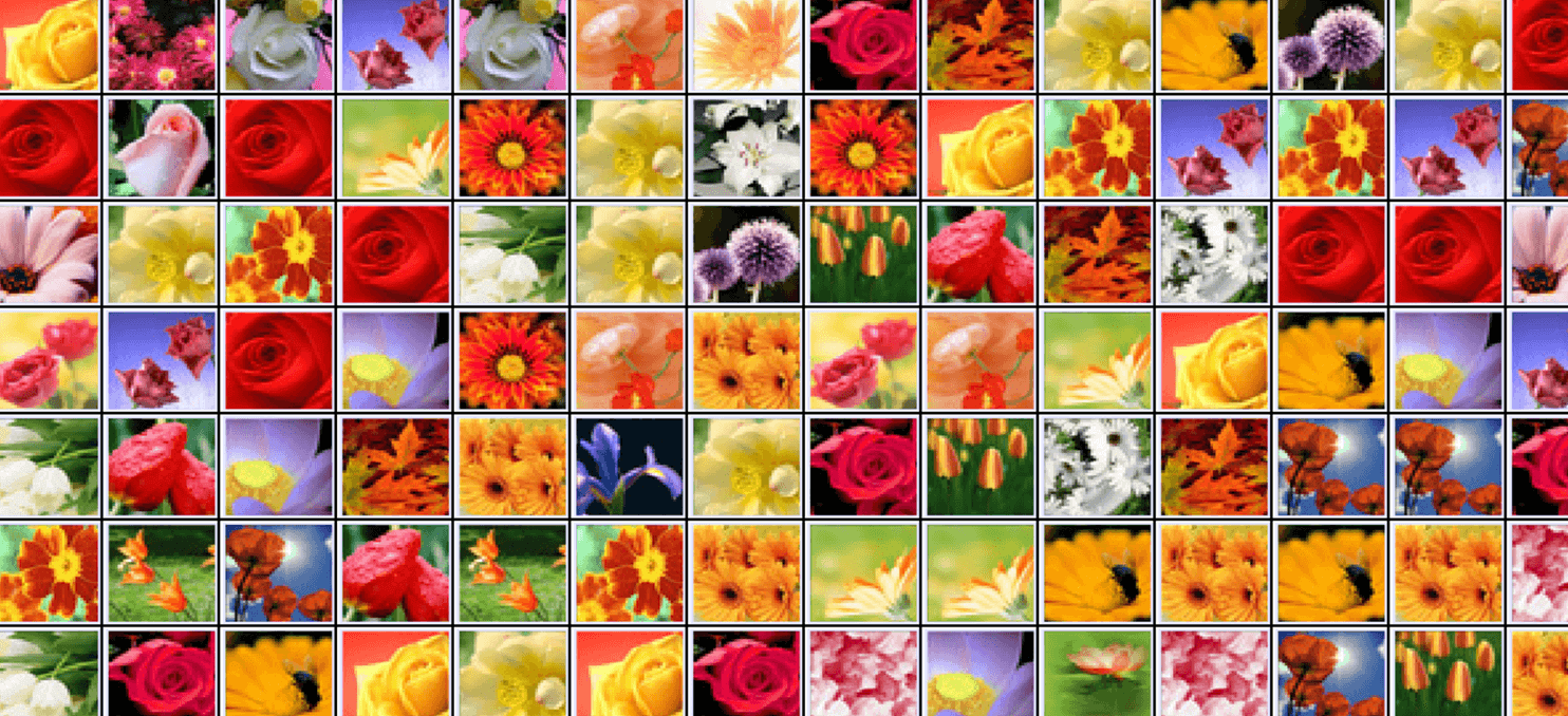 Flower Country Connect full screen